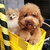 OK I don't post dog photos often but these two little guys were riding around in the bicycle basket and I couldn't resist.