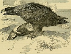 "Image from page 38 of ""Cassell's book of birds"" (1875)"