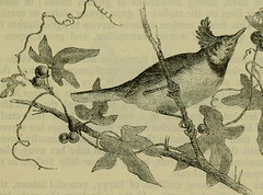"""Image from page 518 of """"Reptiles and birds : a popular account of their various orders, with a description of the habits and economy of the most interesting"""" (1883)"""