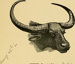 "Image from page 242 of ""Horn measurements and weights of the great game of the world: being a record for the use of sportsmen and naturalists"" (1892)"