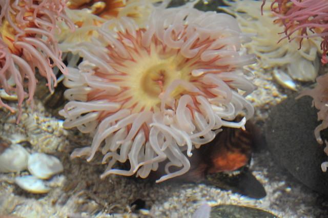 30_Georgia Aquarium