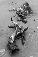 Driftwood on the Beach, Oak Harbor, Washington, Spring 2017