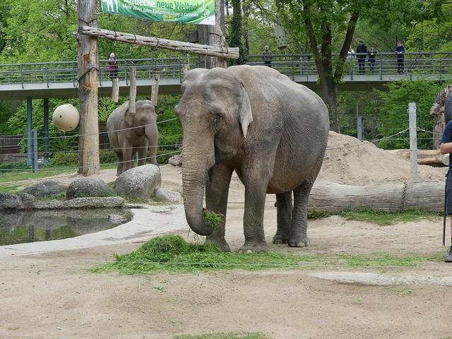 Elefant Nanda, Zoo Karlsruhe