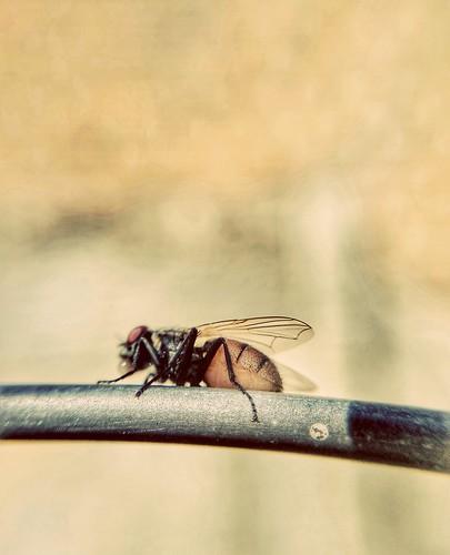 Fly 🌱