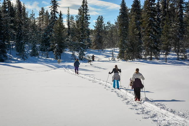 An Arctic Adventure in Swedish Lapland - Traditional Wooden Cross Country Skiing