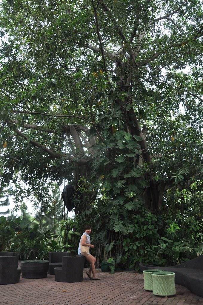 Antique Tree