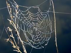 Spider Web By Cobbossee