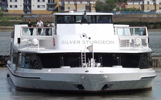 Silver Sturgeon (3) @ KGV Lock 22-05-14