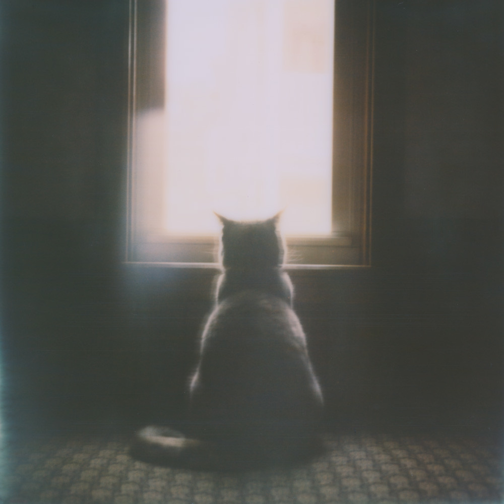 Polaroid Love Affair - Longing