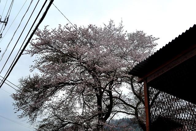 oze_japan_144_51