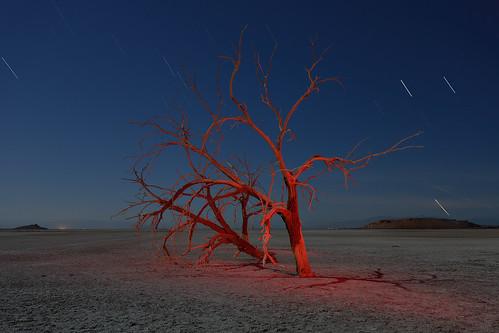 red trees at red hill marina. salton sea, ca. 2014.