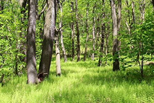 statepark tree forest pennsylvania bark ferns blueknob mountainviewtrail