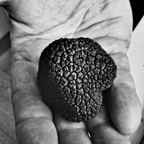 summer black truffle© by Haalo