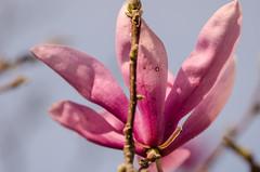 blossom(0.0), bud(0.0), branch(0.0), leaf(0.0), plant(0.0), flower(1.0), purple(1.0), lilac(1.0), macro photography(1.0), flora(1.0), close-up(1.0), spring(1.0), pink(1.0), petal(1.0),