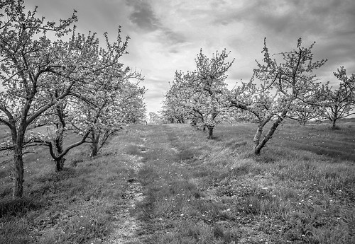 Center Grove Apple Orchard, Displayed at Iowa State Fair Photography Salon 2014