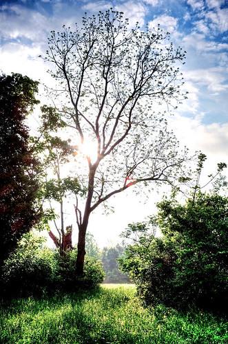 morning sun tree nature landscape path kentucky ky explore louisville 500px jeffersontown ifttt