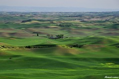 Rolling hills and wheat fields at Steptoe Butte