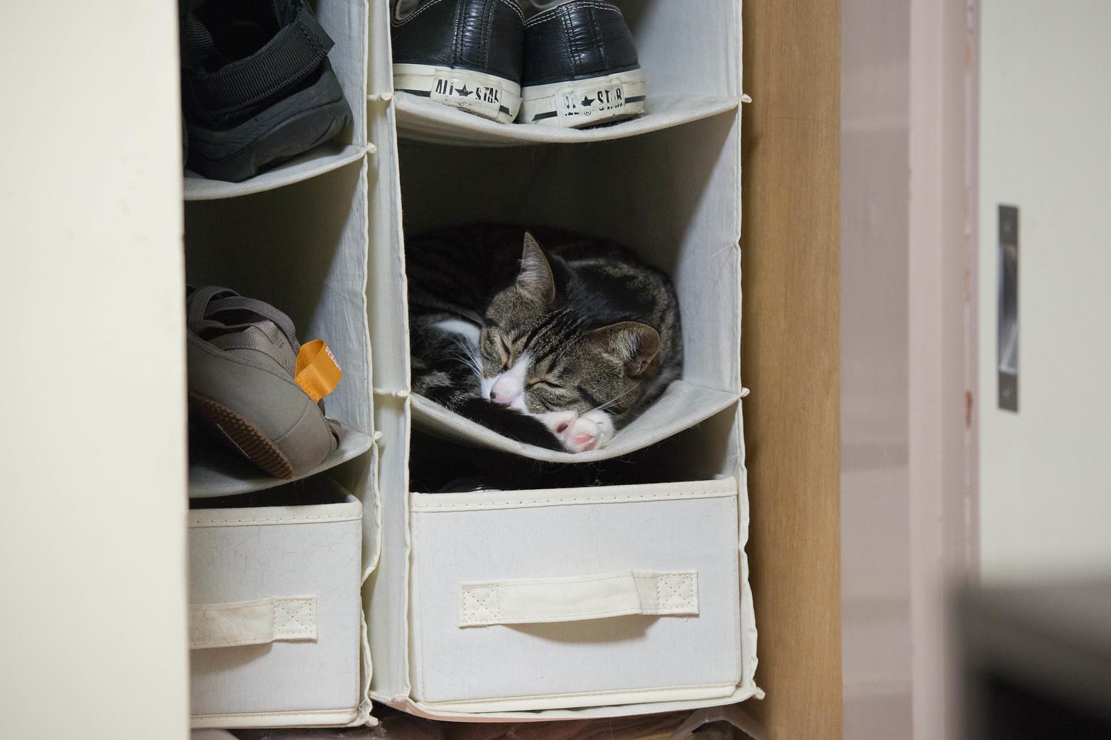 靴入れで寝るべすこ