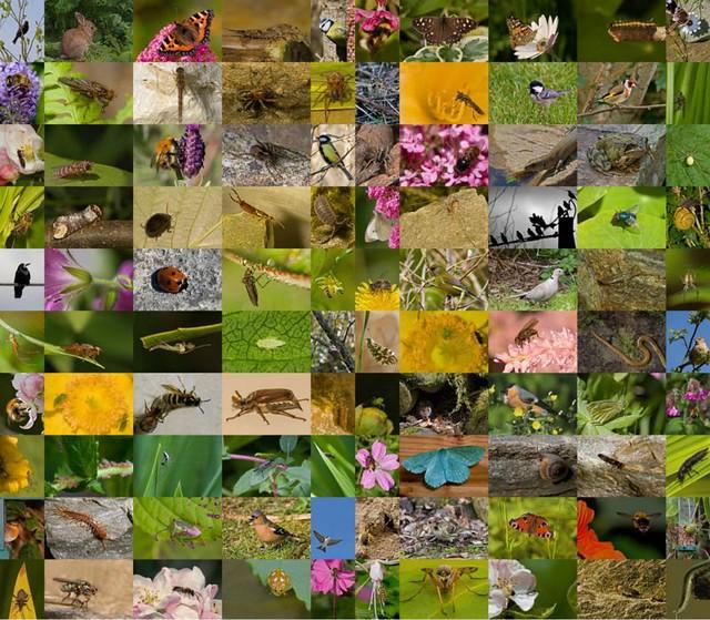 1_especies-diarioecologia.jpg