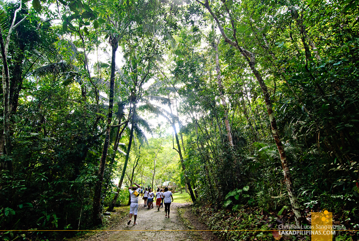 The Trail to Philippine Tarsier & Wildlife Sanctuary in Bohol