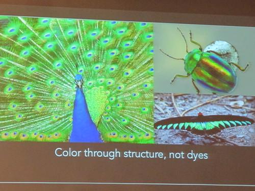 2014仿生科技國際論壇-孔雀尾羽及甲蟲身上的光澤來自體表特殊構造