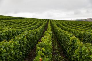 Vignoble près de Vavray