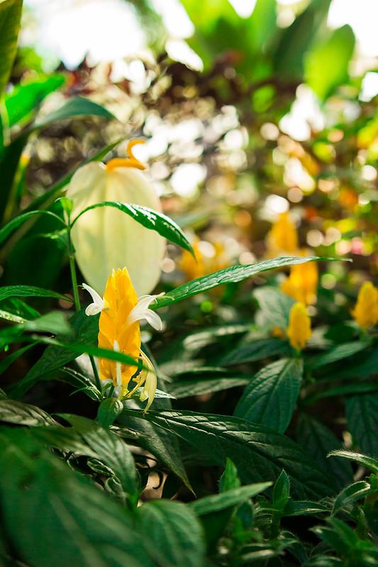 Botanical Conservatory_02