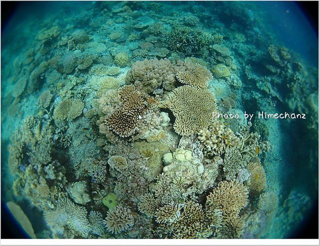 サンゴも沢山あって美しいポイントなんです!