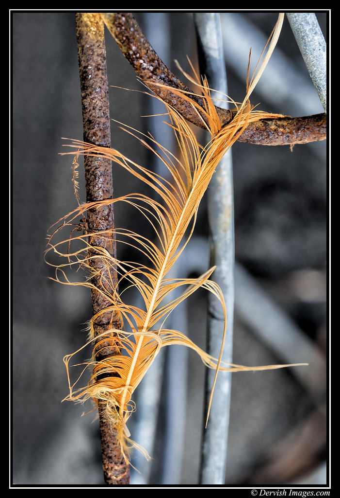 Rusty Feather