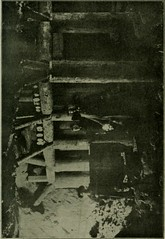 """Image from page 484 of """"Transactions"""" (1895)"""