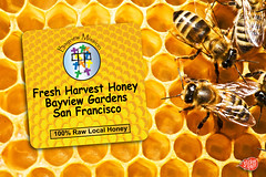honey bee, honeycomb, invertebrate, membrane-winged insect, bee,