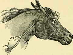 """Image from page 657 of """"The standard horse book, comprising the taming, controlling and education of unbroken and vicious horses"""" (1895)"""
