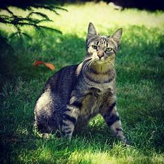 Pero cómo? Otra foto? Que no quiero más fotos! #igersitzi #igerscats #igersanimals #alpha6000 #photoshoot #itzisbook #jardining #ytodaviaquedan  #igerstobago