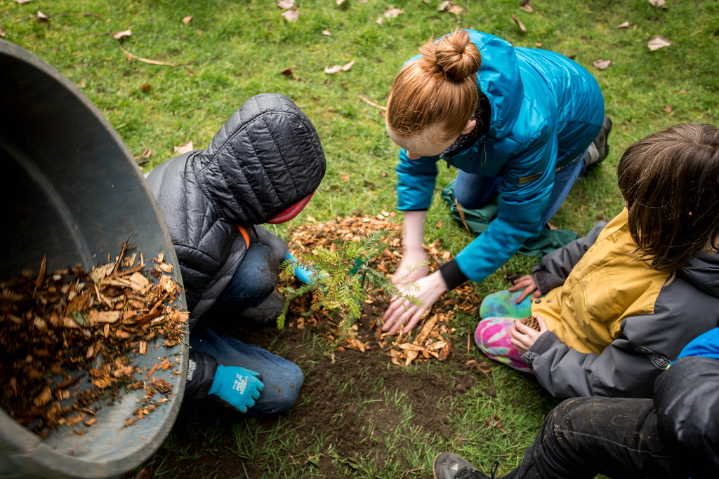 redwood-tree-planting-140