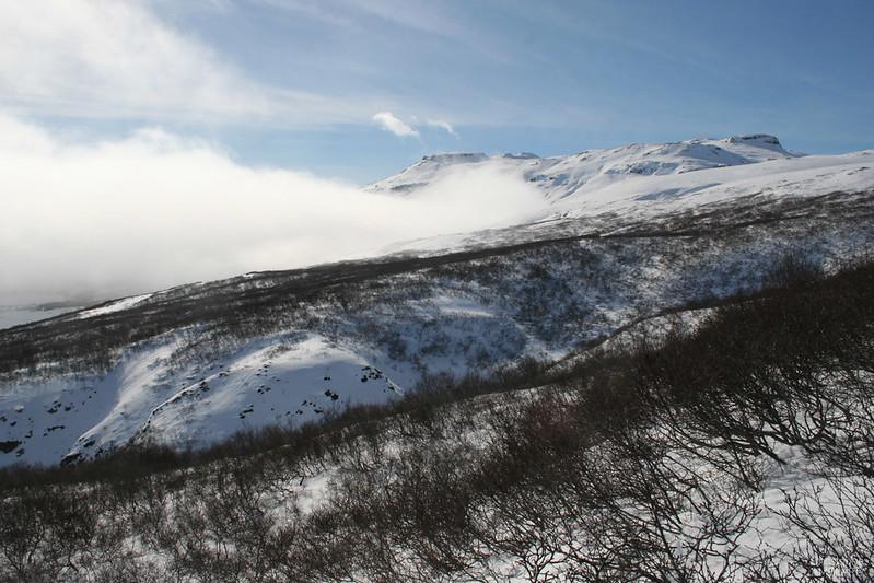 Haukadalskogur