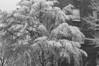 Winter, Forest Hills