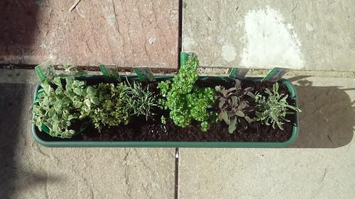 Tiny herb garden ahoy