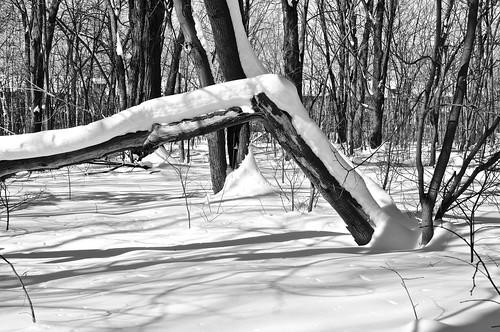 2017©rpd'aoust ahuntsic aperture3 arbres d90 février hiver landscape montréal neige nikkor18300mm nikon nikond90 paysage slowphotography snow trees winter parcduboisédesaintsulpice boisé
