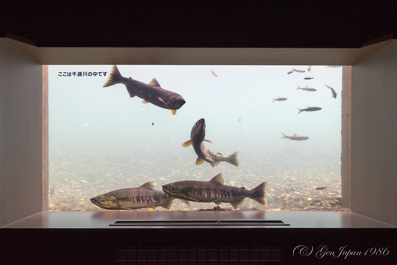 サケのふるさと 千歳水族館