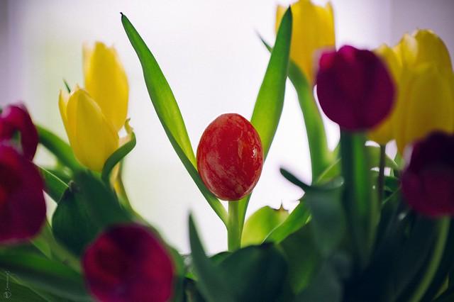 Easter V °103/365