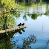 For those of you who like your ducks in a row..#ducks #reflections #waikatoriver