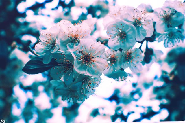 Blossom @springtimebouquet