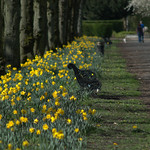 Yellow in Haslam Park Preston