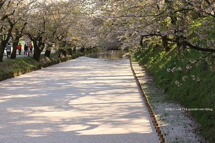 20140502_AomoriSakura_2112 ff