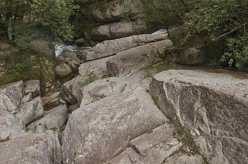 【写真】2014 離島めぐり : 白谷雲水峡1/2014-04-12/PICT6141