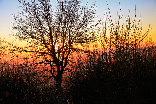 november blue autumn sunset red sky orange foothills plant tree nature yellow landscape outdoors hiking socal southerncalifornia sangabrielmountains sunsetridge losangelescounty echomountain canonef24105mmf4lisusm 5dm2 5dmii