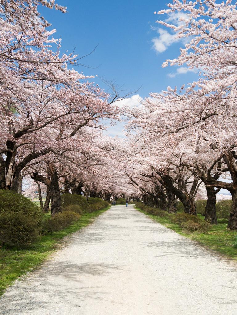 北上展勝地 Kitakami Tenshouchi