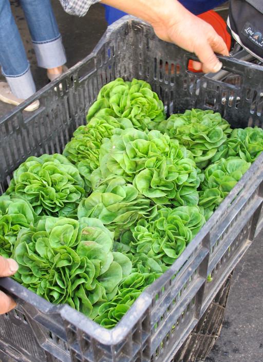 Lettuce at Hollywood Farmer's Market