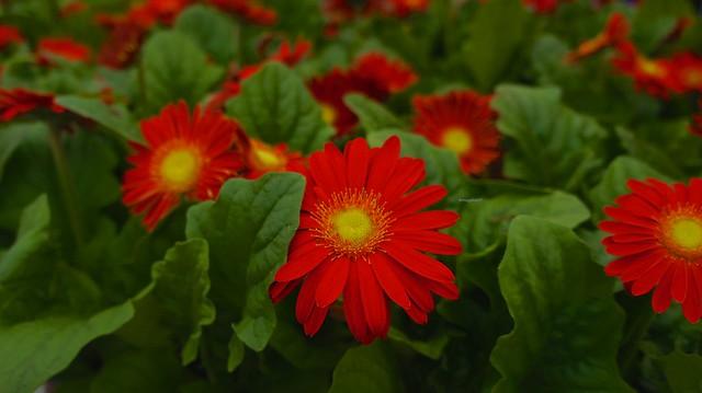 anteketborka.blogspot.com,  fleur 5