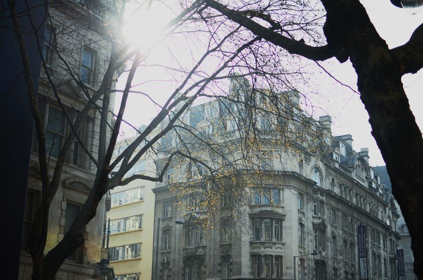 london light trees